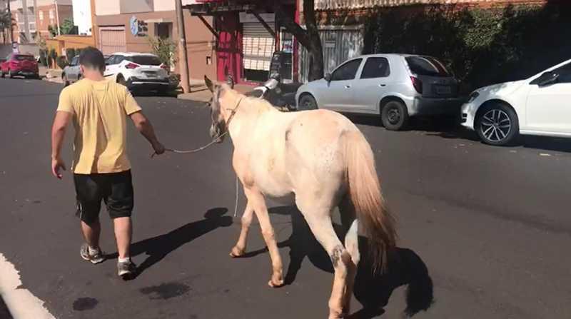 Comerciantes resgatam égua abandonada em avenida na zona Sul de Ribeirão Preto, SP