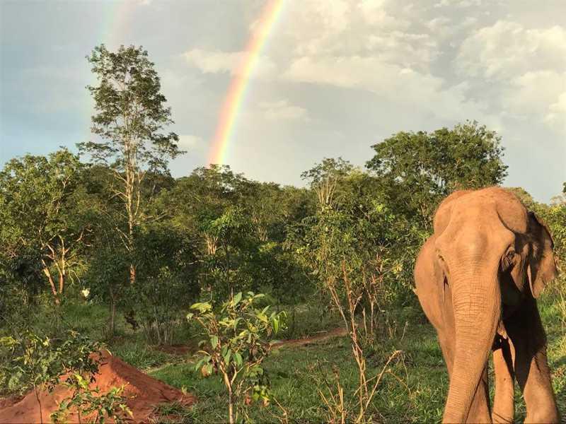 Shopping Santa Úrsula recebe exposição de fotos de elefantes do Santuário de Elefantes Brasil. — Foto: Arquivo Santuário de Elefantes Brasil (SEB)