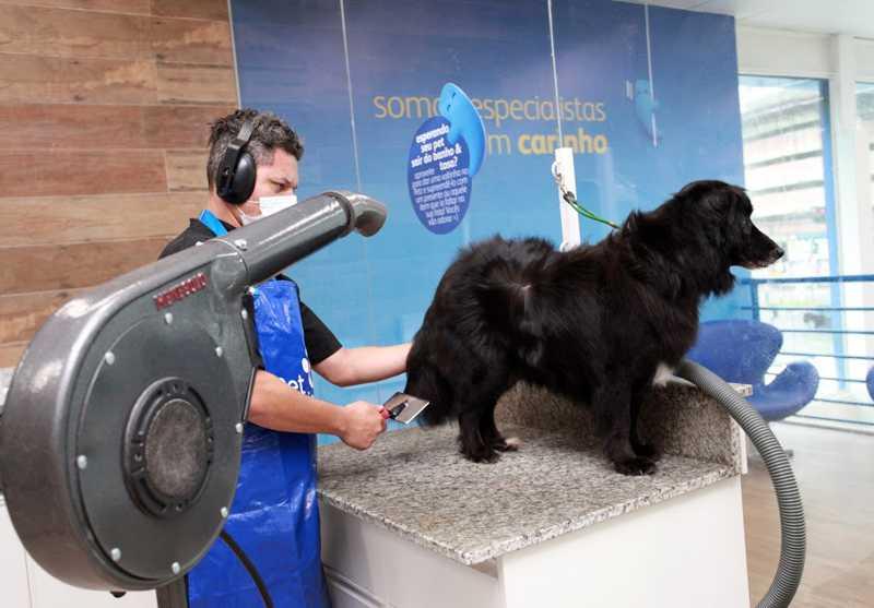 Mais de 100 cães e gatos estão disponíveis para adoção em pet shops de Santos, SP
