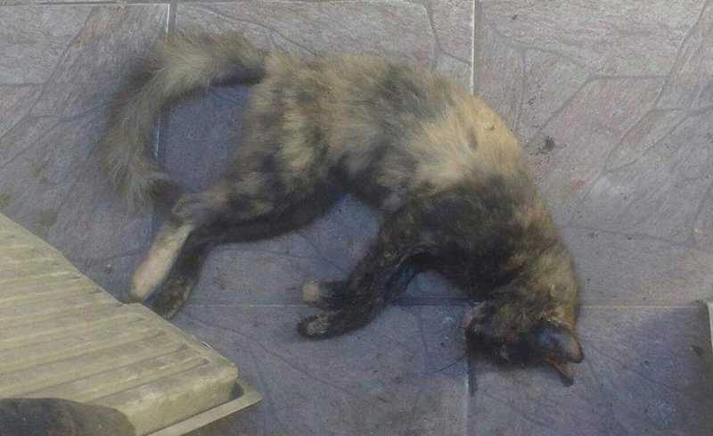 Gatos foram encontrados mortos por moradores do bairro Areia Branca em Santos, SP — Foto: Arquivo Pessoal