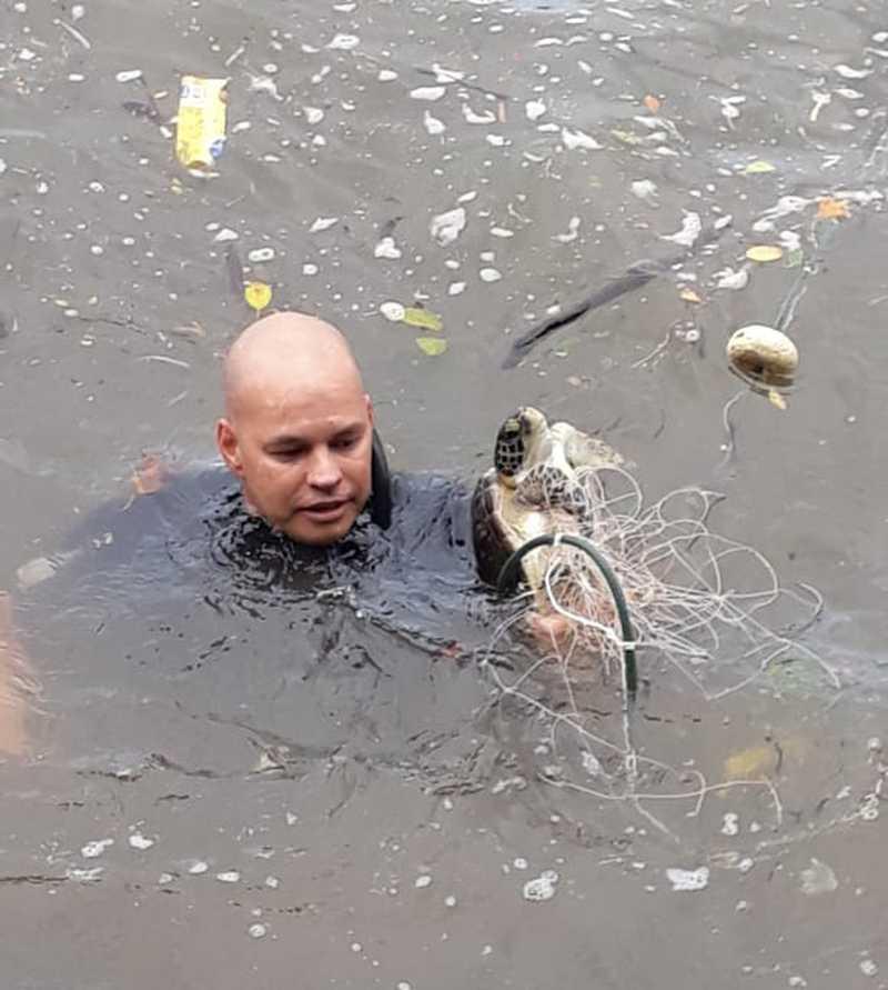 Tartaruga presa em rede de pesca é resgatada em Ubatuba, SP