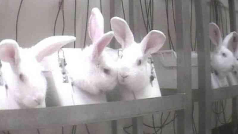 Suíça vai referendar proibição de testes experimentais em animais e humanos