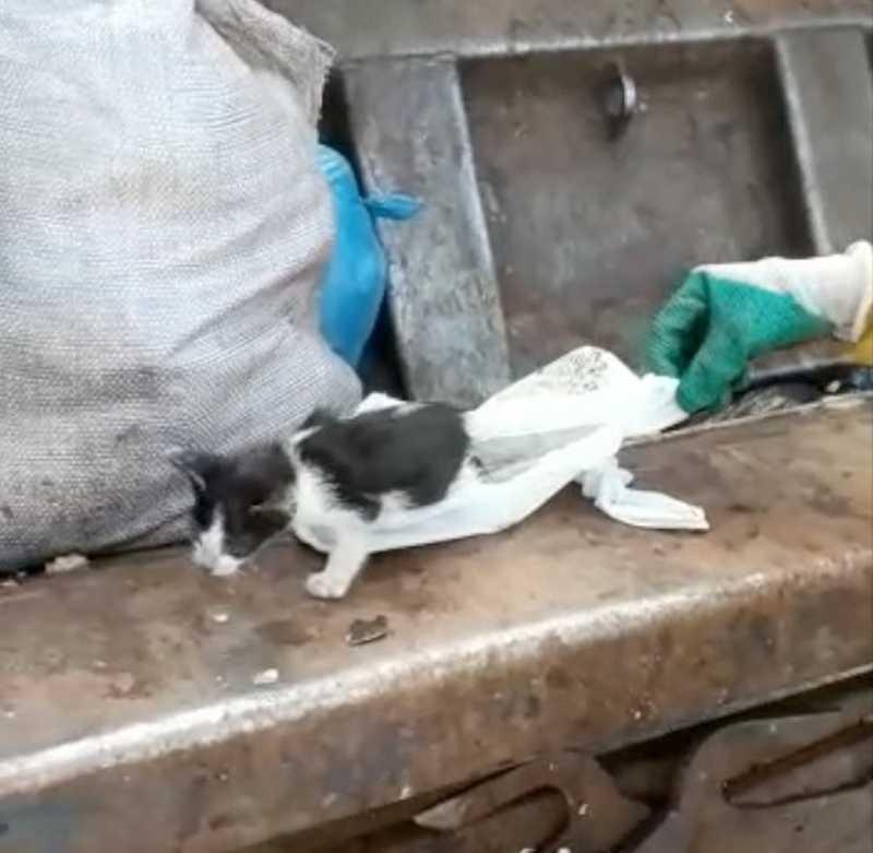 Gato foi resgatado por garis em Araguaína — Foto: Reprodução