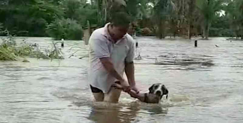 Cachorro que era levado por enxurrada é resgatado por morador; veja o vídeo