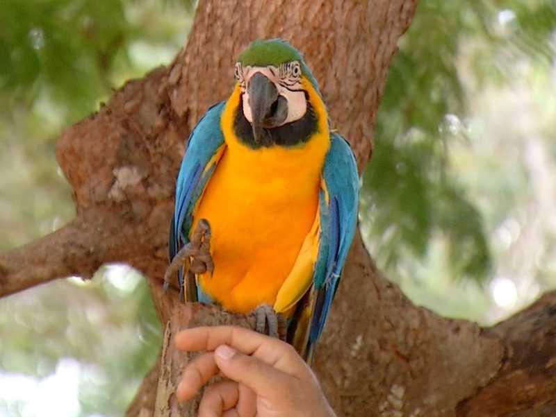Arara-canindé é flagrada em praça de Palmas (TO) e recebe carinho de moradores