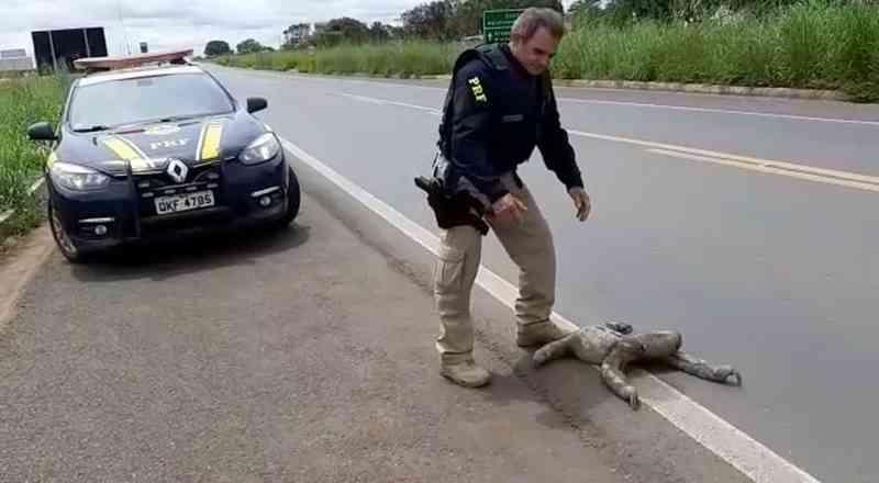 Preguiças são resgatadas pela PRF atravessando rodovia no norte do Tocantins