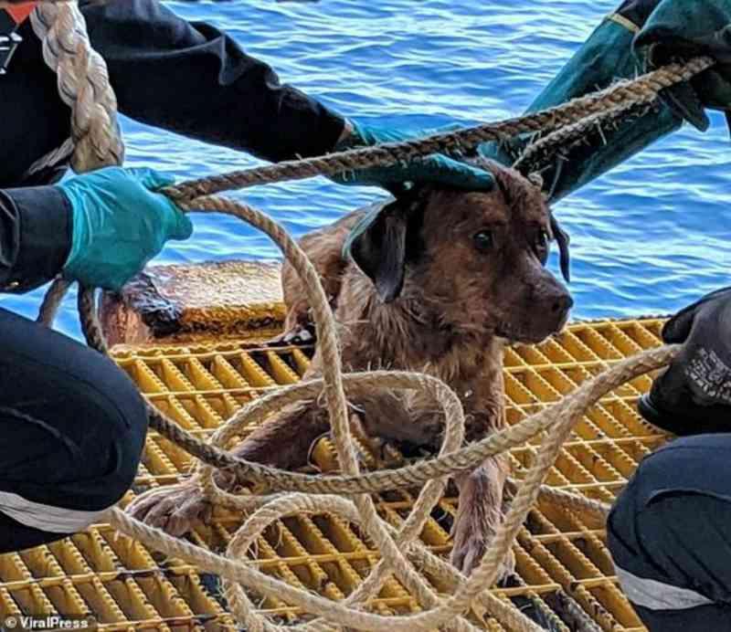 Cadela perdida no mar na Tailândia encontrada a 260 km da costa