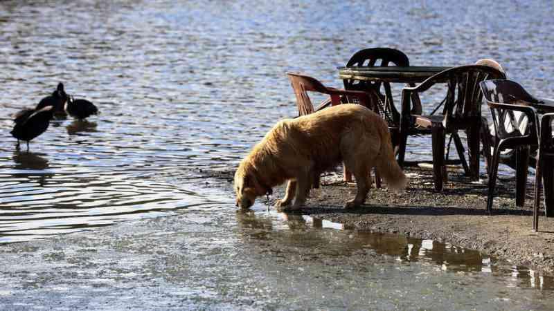 Extermínio de cães na capital da Turquia mostram como as leis são pobres