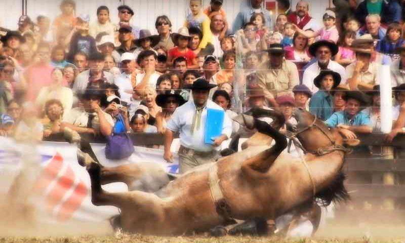 13.000 pessoas já assinaram petição para proibir as gineteadas no Uruguai
