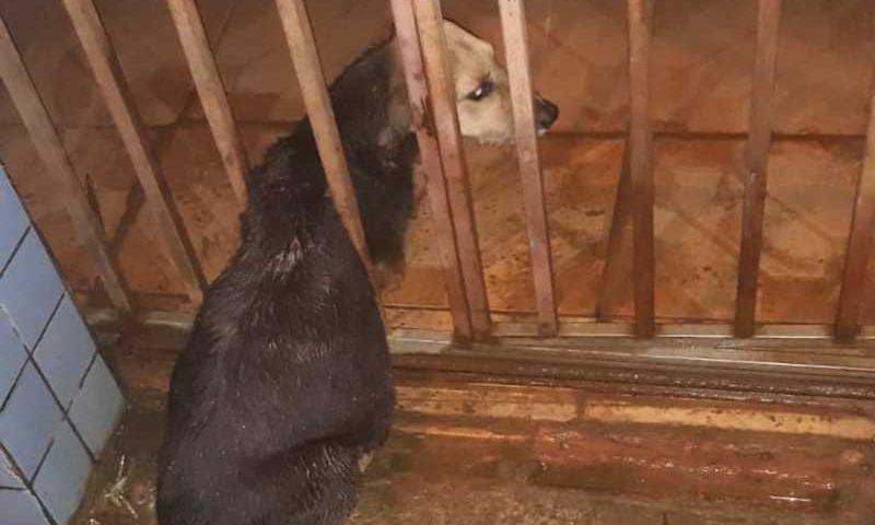 Cadela não conseguiu passar pela grade do portão e ficou presa na madrugada deste sábado (4) — Foto: Divulgação/Corpo de Bombeiros do Acre