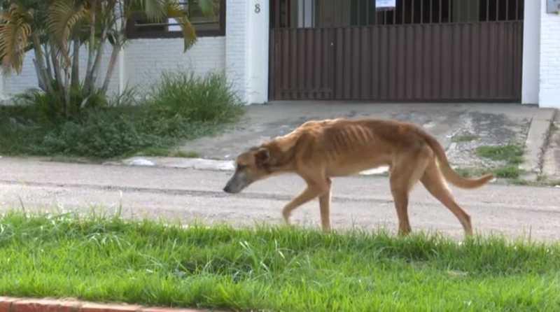 Animais vivem em situação de abandono em Rio Branco — Foto: Reprodução