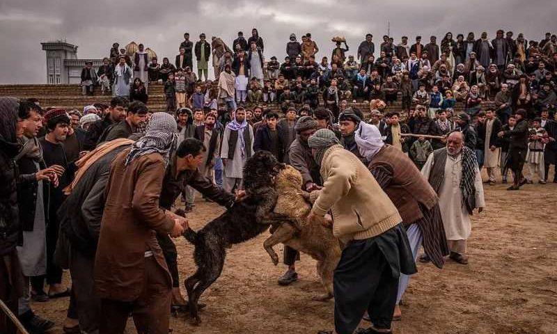 O buzkashi, forma violenta de pólo, é extremamente popular no Afeganistão. Foto: Jim Huylebroek / The New York Times