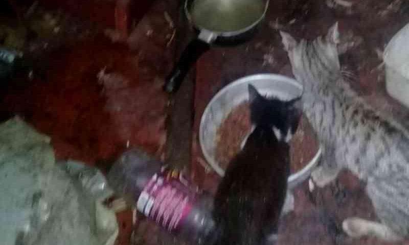Mais de 20 gatos são achados mortos em casa de Salvador; 12 estavam vivos e foram resgatados