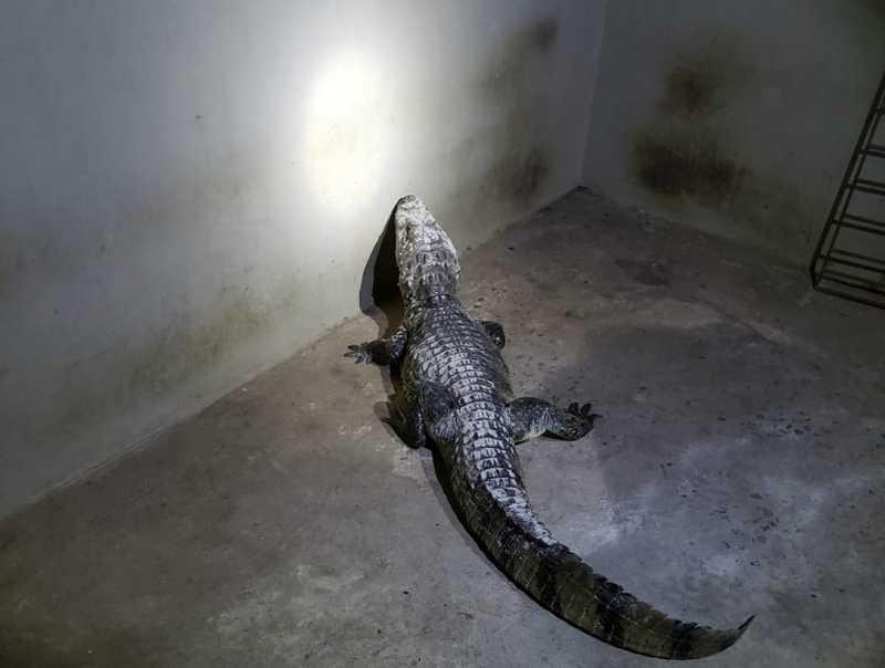 Animal foi encontrado por populares e removido pelo Corpo de Bombeiros — Foto: Divulgação/Corpo de Bombeiros