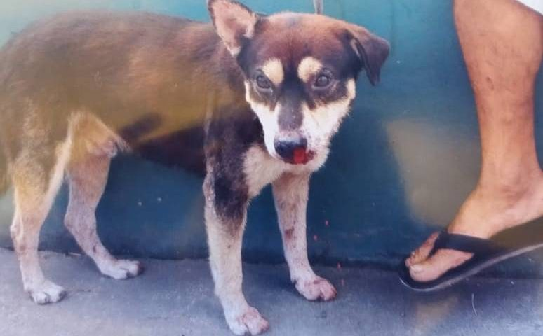 Vigilante que espancou cachorro em Simões Filho (BA) é afastado e terá que arcar com tratamento do animal, diz ONG