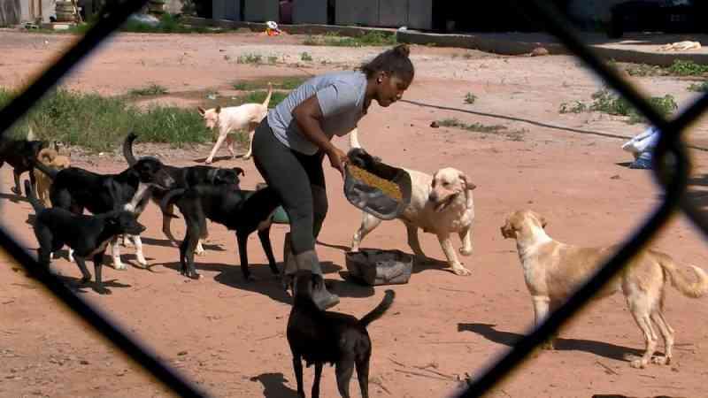 Abrigo cuida de mais de 100 animais e passa por dificuldades em Vila Velha, ES