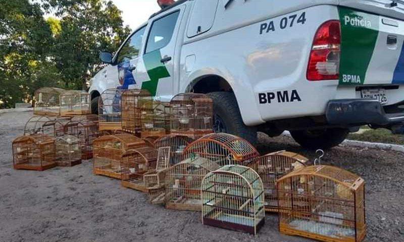 Polícia Ambiental apreende animais da fauna silvestre em Colatina, ES