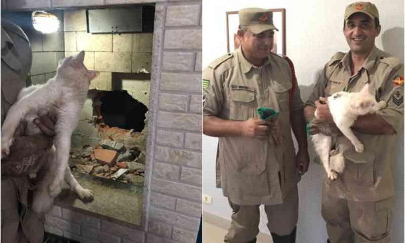 Bombeiros de Itumbiara (GO) resgatam gato preso em chaminé de prédio