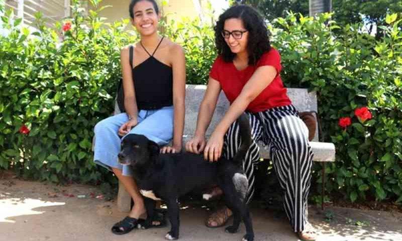 Parceria entre acadêmicos e Unimontes busca criar ambiente harmonioso com os cães que vivem no campus sede