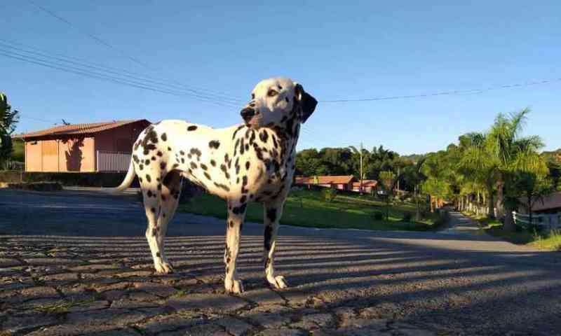Animais podem deixar de ser 'coisa' em Minas Gerais; projeto avança na CCJ