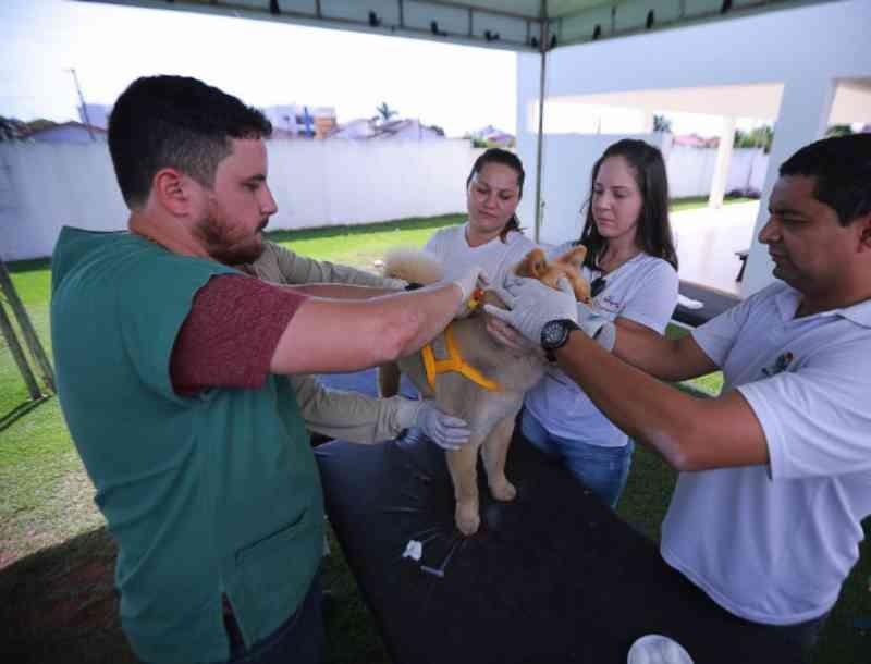 Nova etapa para ser feita 'chipagem' em cães e gatos é neste sábado em Nova Mutum, MT