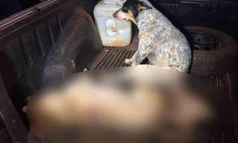 Homem mata cachorro e filhote a tiros e é preso com 4 armas em casa em MT