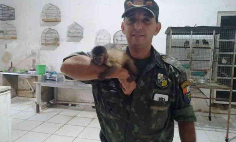 Batalhão de Proteção Ambiental em Mato Grosso já resgatou mais de 140 animais este ano; conheça o trabalho