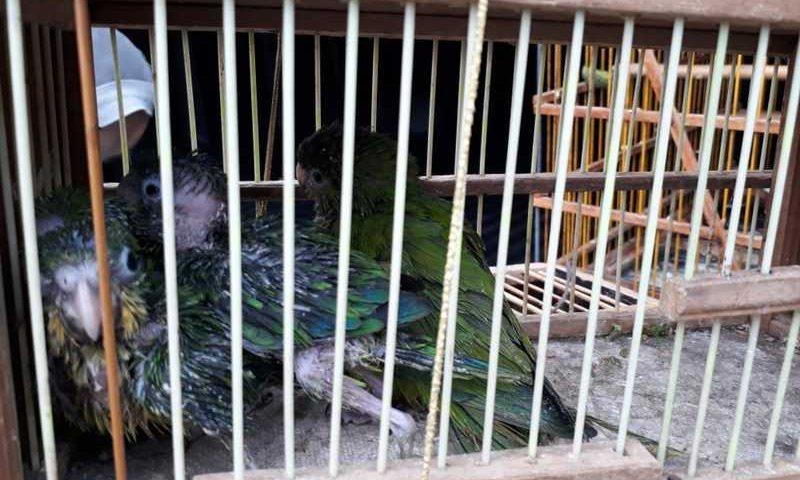 Ibama apreende 194 aves silvestres em feira popular, em Campina Grande — Foto: Divulgação/Ibama