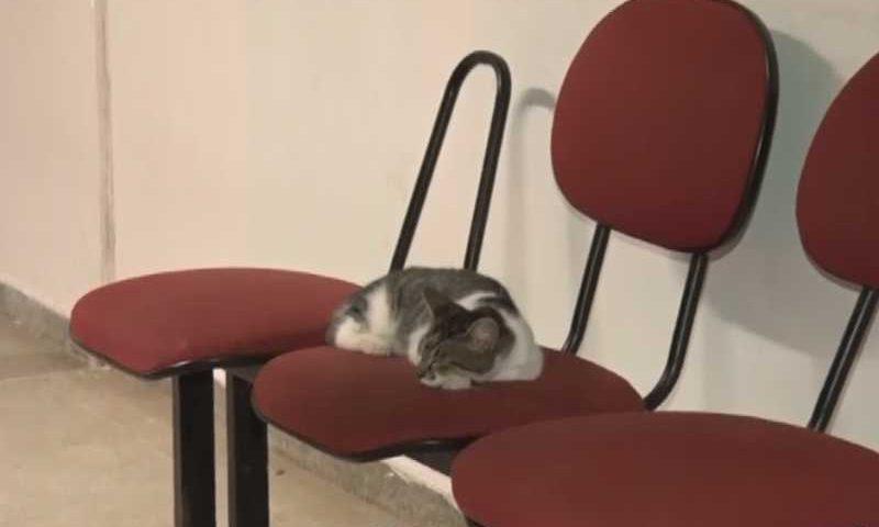 Diante da quantidade de animais que vivem no campus, não é difícil flagrar cenas em que os gatos ocupem espaços direcionados para os seres humanos. Foto: Reprodução/TV Manaíra