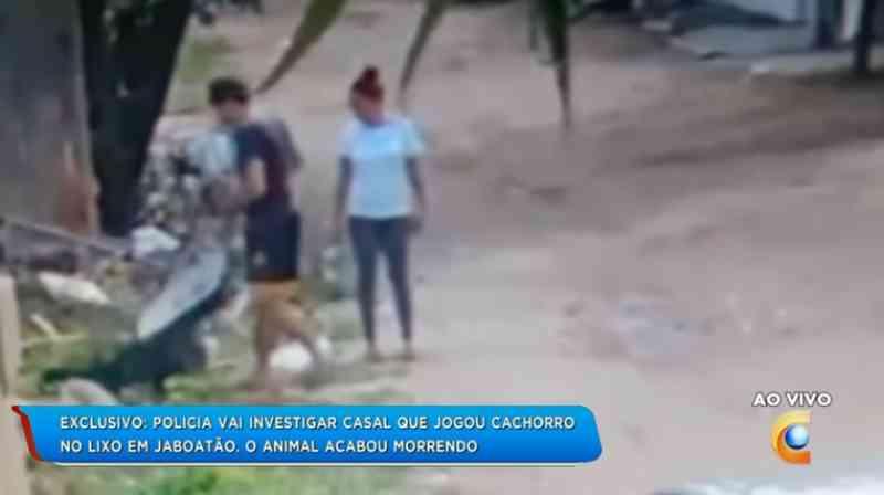 Polícia procura casal que jogou cadela doente no lixo em Jaboatão dos Guararapes, PE; vídeo