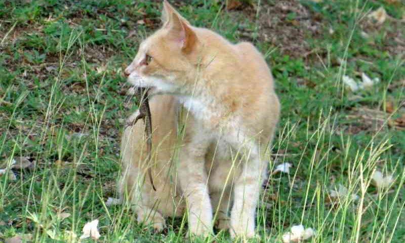 Fernando de Noronha (PE) planeja ação para controlar população de gatos