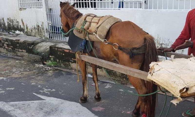 Animal ferido foi resgatado em Teresina. — Foto: Divulgação/Polícia Civil
