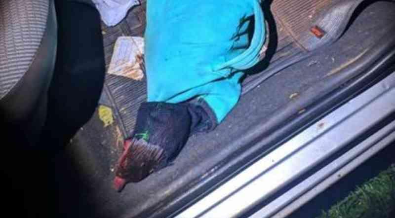 Polícia Militar flagra rinha de galos; homem cobrava R$ 20 de entrada