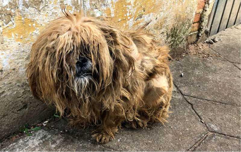 Polícia resgata cão sem água, alimento e com parasitas em Curitiba