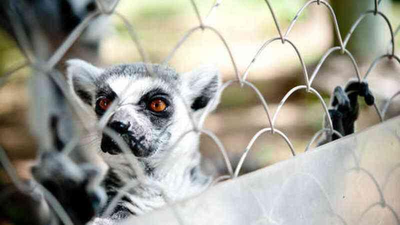 Os zoos como os conhecemos estão à beira da extinção?