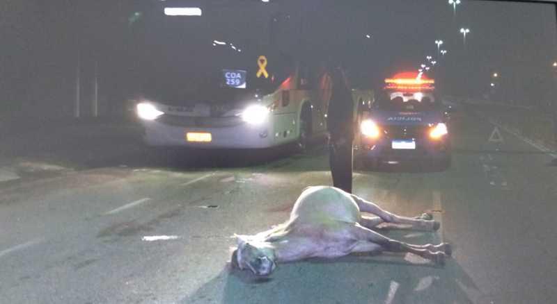O cavalo morreu no local e foi encaminhado para o Centro de Controle de Zoonoses (CCZ) — Foto: Osiel Azevedo/Inter TV
