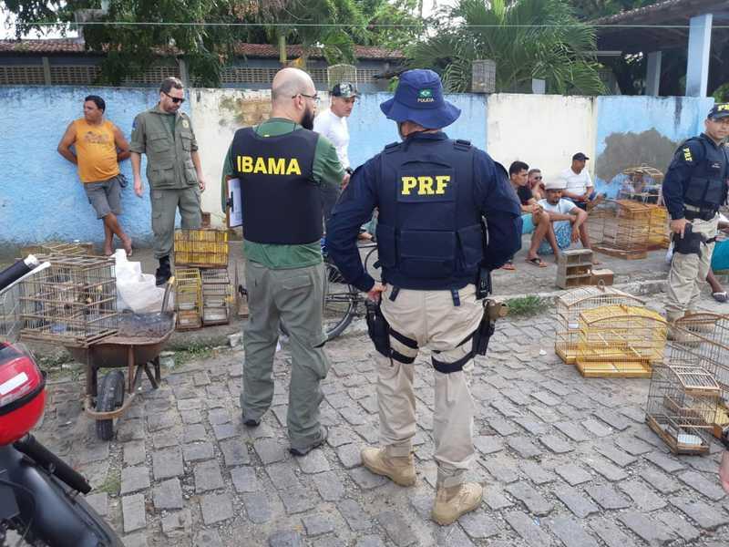 Operação conjunta do Ibama e da PRF apreende aves e prende suspeitos de tráfico de animais silvestres na Grande Natal. — Foto: Divulgação/PRF