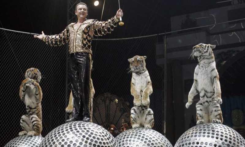 Uma performance de circo com tigres na Rússia em uma foto de arquivo (Tatyana Makeyeva / AFP / Getty Images)