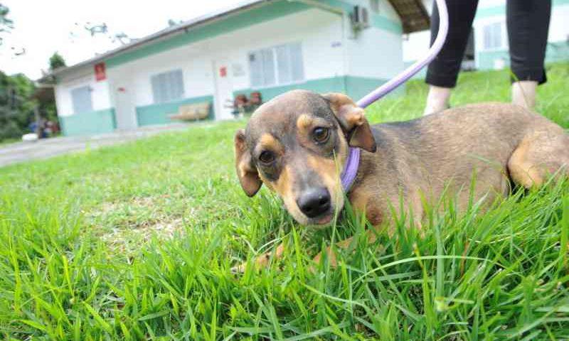 Cepread, em Blumenau (SC), faz campanha para arrecadar roupas para cães e gatos