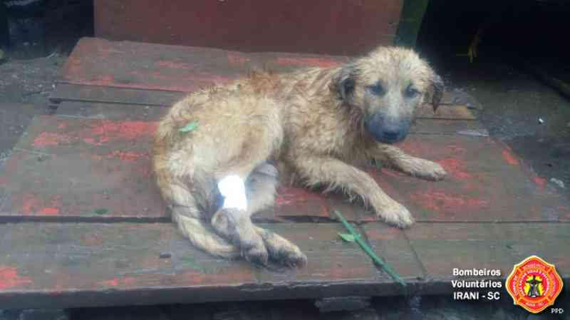 Bombeiros de Irani (SC) resgatam cachorro que ficou preso em cerca de arame farpado