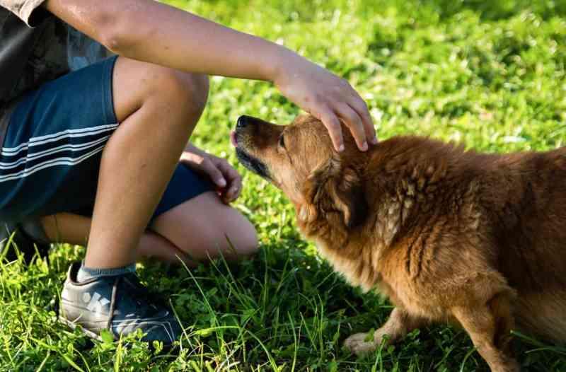 Escola de Itupeva (SP) incentiva cuidado com os animais