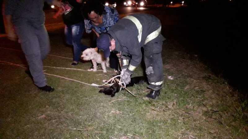 Bombeiros resgatam cachorro atropelado, mas infelizmente ele não resistiu aos ferimentos e morreu