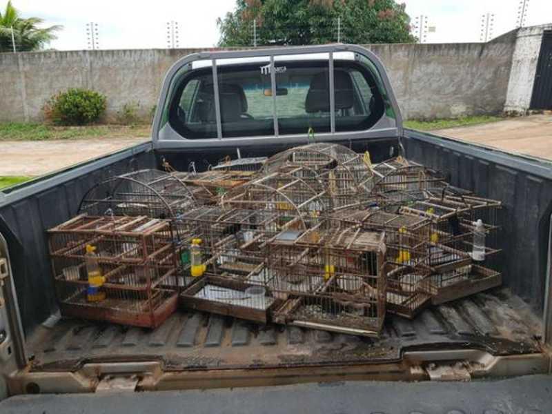 Ao chegar no local a Polícia Militar Ambiental encontrou os animais sendo mantidos em cativeiro sem autorização. As gaiolas e os animais foram apreendidos. O homem foi levado para a delegacia e vai responder por crime ambiental. - Polícia Ambiental