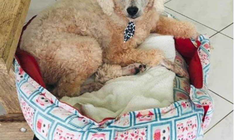 Pipoca, 13 anos, morreu atropelado na última semana(Foto: arquivo pessoal)