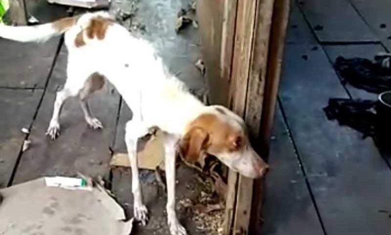 Animal foi encontrado desidratado e magro por equipe da ONG Patinha Carente — Foto: Reprodução