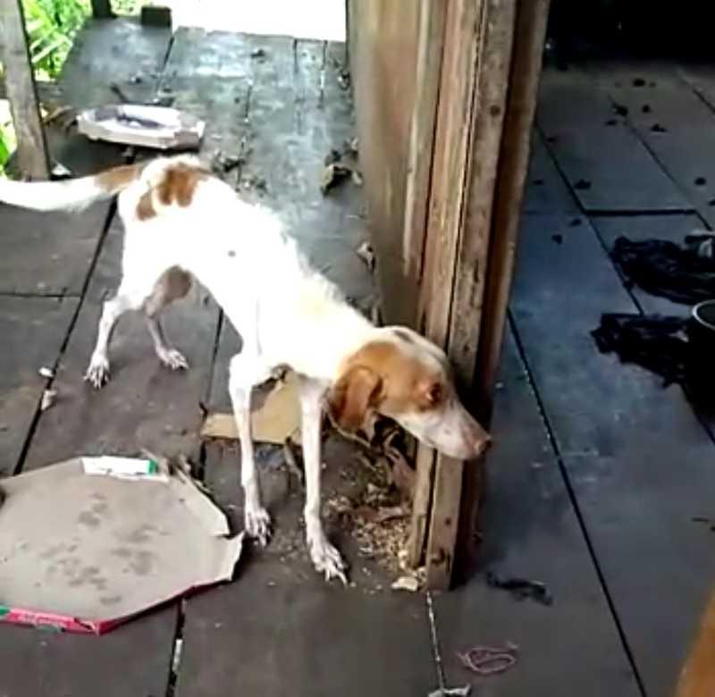 Cachorro é resgatado após ser deixado só em apartamento sem comida e água por duas semanas no AC