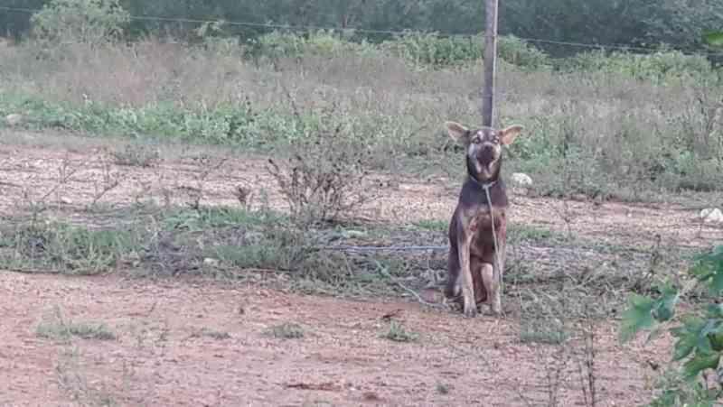 Denúncia na internet gera busca por cachorro maltratado em Arapiraca, AL