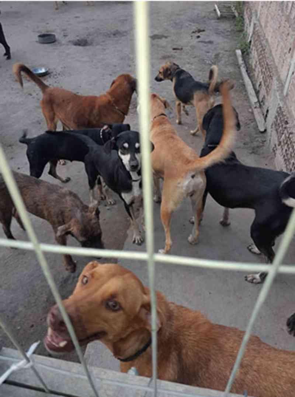 Abrigo de animais em Maceió (AL) ameaça fechar portas por falta de apoio financeiro
