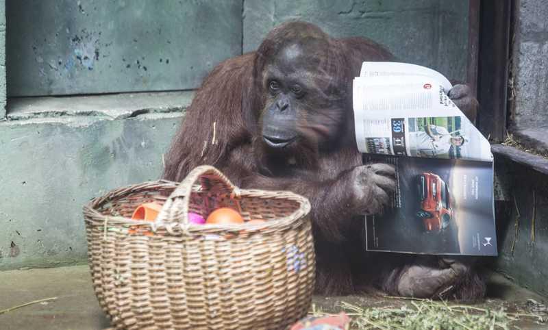 Sandra com uma revista ao lado da cesta com sua comida. MARIANA ELIANO
