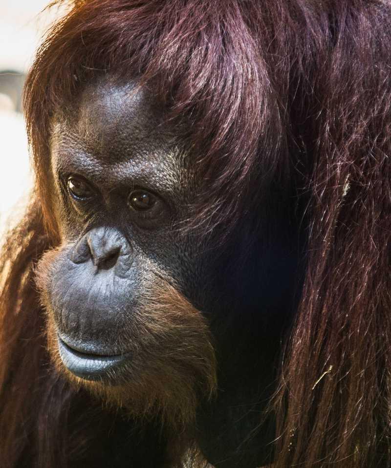 Sandra, fotografada no Ecoparque, antigo zoológico de Buenos Aires. MARIANA ELIANO